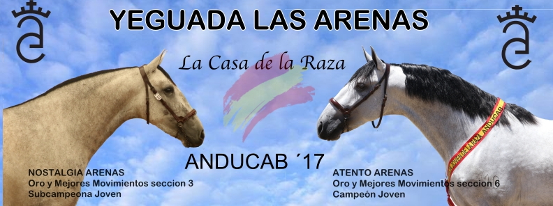BANNER ARENAS